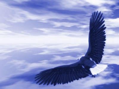 eagle_fly