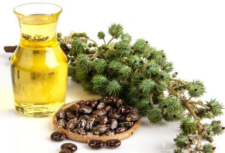 Paquete de aceite de ricino